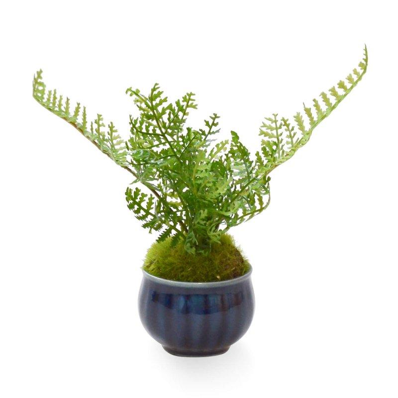 シノブ ぐいのみ 瑠璃菊型 CUPBON 盆栽 フェイクグリーン