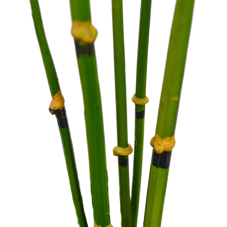 サンキライ 寄せ植え苔玉 黒岩皿 CUPBON 盆栽 フェイクグリーン