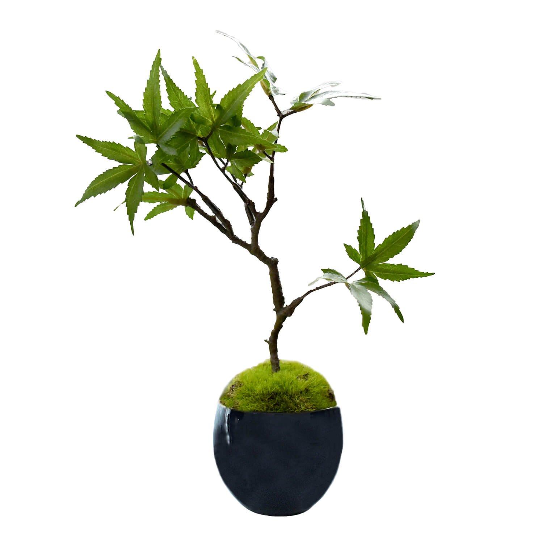 モミジ 小鉢 藍 CUPBON 盆栽 フェイクグリーン