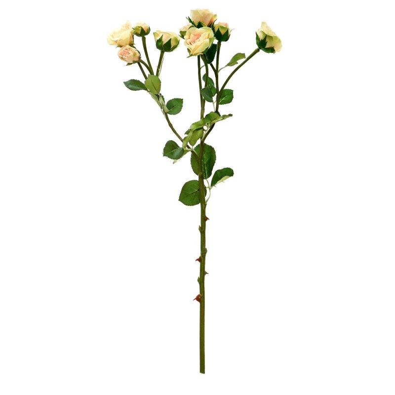 ローズ 薔薇 シェルピンク 単品花材