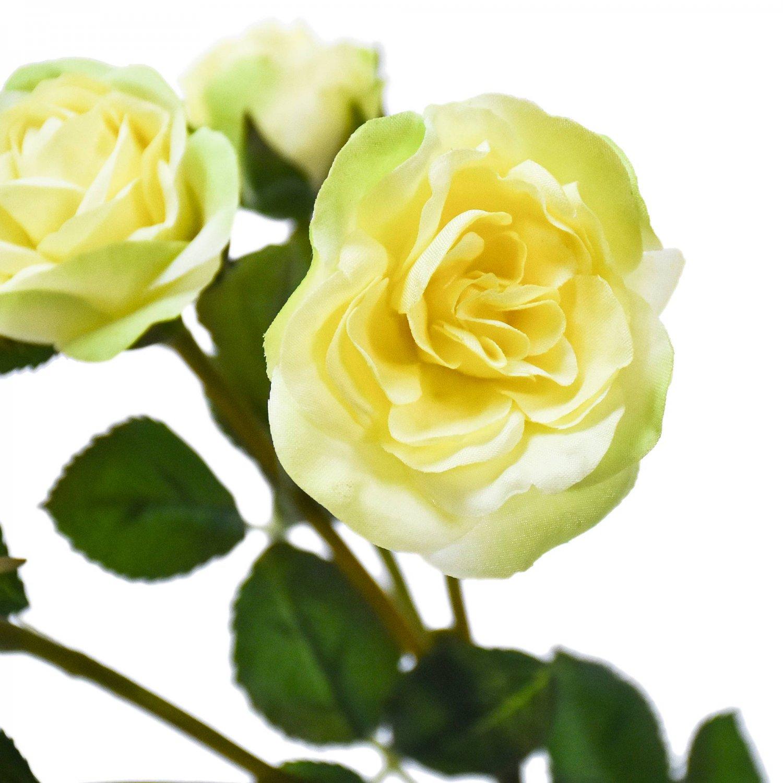 ローズ 薔薇 クリームイエロー 単品花材