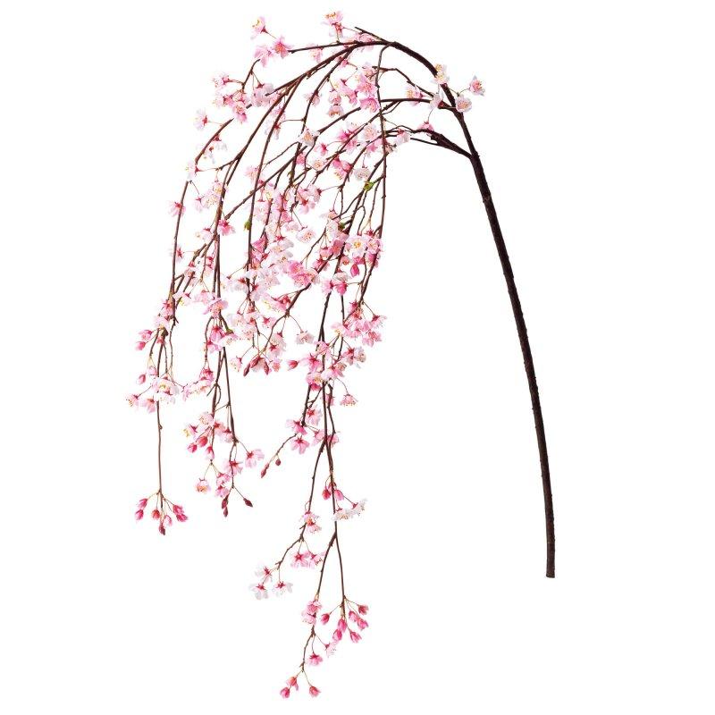 しだれ桜 ピンク  単品花材