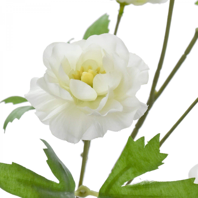 スプレー咲きラナンキュラス ホワイト 単品花材