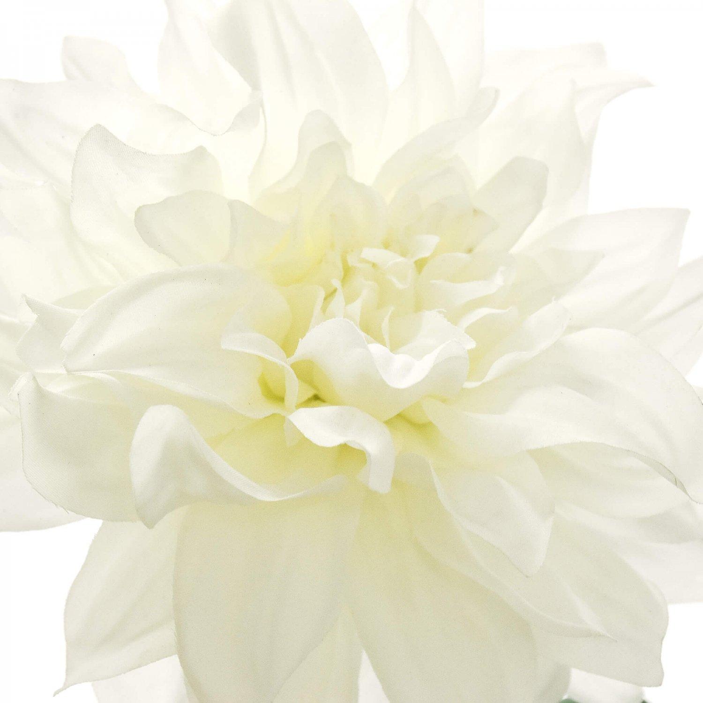 ダリア 天竺牡丹 ホワイト 単品花材