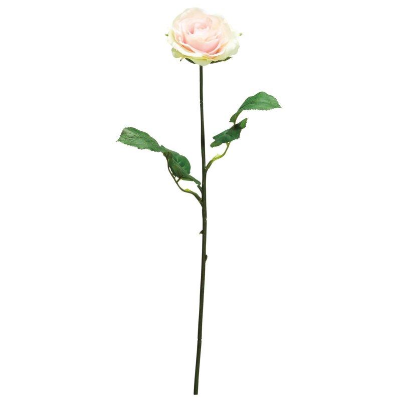 ローズ 薔薇 ソフトピンク 単品花材