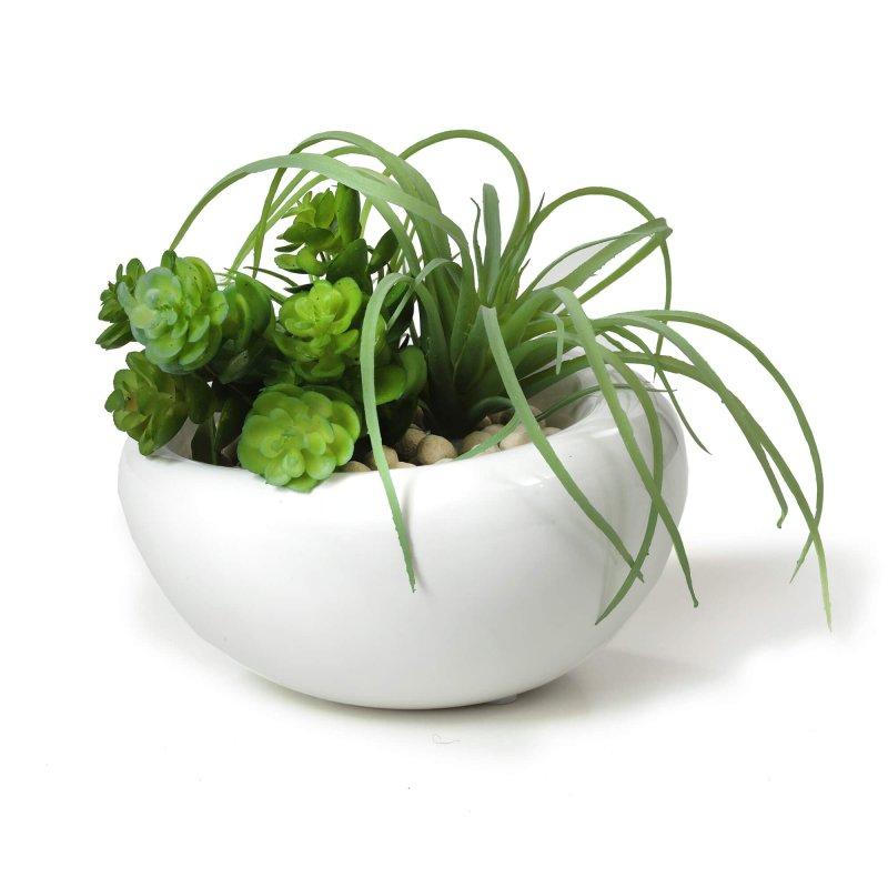 アオエニウム・チランジア 白陶器S フェイクグリーン