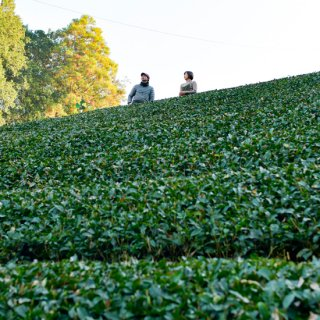 【2021年3月1日より募集開始】茶畑オーナー(1年間)静岡茶発祥の地・足久保の茶畑のオーナーに