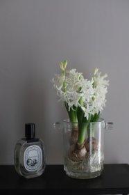 春の切花&球根のお花セット ご自宅用  送料込み 5500yen 月曜or金曜発送です。
