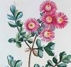Plantarum historia succulentarum