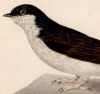 Manuel d'ornithologie