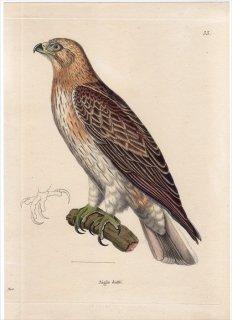 1820年 Temminck 新鳥類図譜 Pl.33 タカ科 ケアシクマタカ属 ヒメクマタカ Aigle botte 雄 成鳥