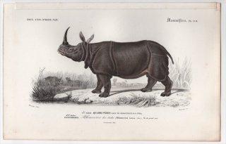 1849年 D'Orbigny 万有博物事典 哺乳類 Pl.9d サイ科 インドサイ属 インドサイ Rhinoceros indicus