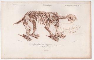 1849年 D'Orbigny 万有博物事典 哺乳類の化石 Pl.5 メガテリウム科 メガテリウム Megatherium restaure 骨格 化石 恐竜