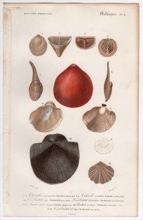 1849年 D'Orbigny 万有博物事典 軟体動物 Pl.9 テシデア科 ゴニオフィルム科 テレブラツラ科 ナミマガシワ科など種