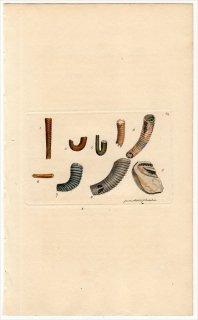 1814年 Sowerby イギリスの化石貝類学 Pl.61 ハミテス科 ハミテス属 HAMITES 5種 プラノハミテス属 1種