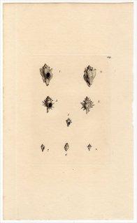 1817年 Sowerby イギリスの化石貝類学 Pl.189 アッキガイ科 クダヨウラク属 アッキガイ属 2種