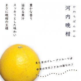 河内晩柑3kg(ご家庭用)
