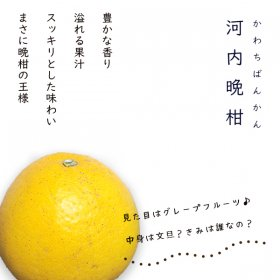 河内晩柑4kg(ご家庭用)