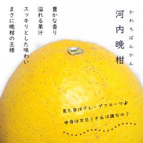 河内晩柑9kg(ご家庭用)