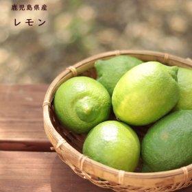レモン1.5kg(ご自宅用)国産レモン 鹿児島県産