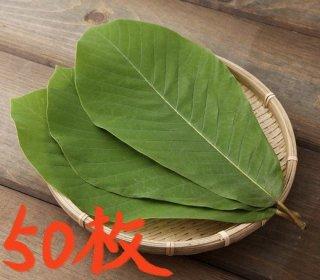 飛騨の天然 生朴葉(ほおば)  50枚