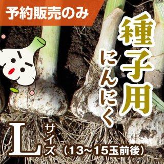 種子用にんにく Lサイズ 1kg