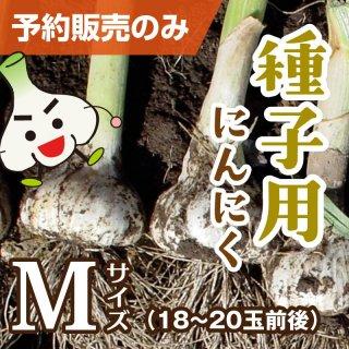 種子用にんにく Mサイズ 1kg