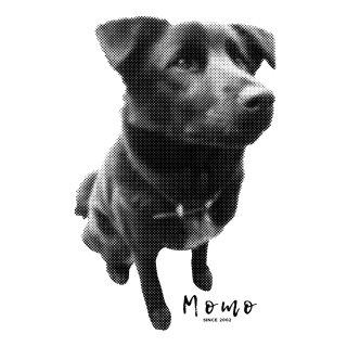 【絵柄C】ペットの写真でつくる ドット+お名前小さく