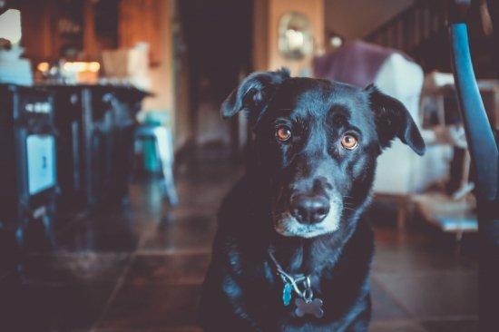 動物病院「徹底節税」シリーズ1 | 王道の節税対策 編 PART1