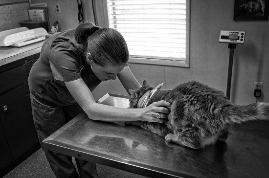 動物病院「経営お役立ち情報」シリーズ3 | めちゃくちゃいたい社会保険 編 PART2