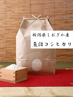<img class='new_mark_img1' src='https://img.shop-pro.jp/img/new/icons15.gif' style='border:none;display:inline;margin:0px;padding:0px;width:auto;' />新潟県 しおざわ産 魚沼こしひかり