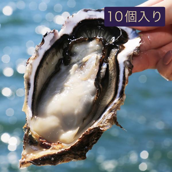 桜満開牡蠣(殻付き牡蠣・生食用)【10個入り】