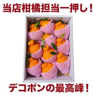 愛知県蒲郡産 温室樹熟デコポン 3kg