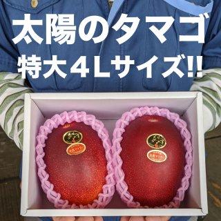 宮崎県産 太陽のタマゴ超特大4Lサイズ
