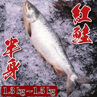 紅鮭 半身 1.3�〜1.5�