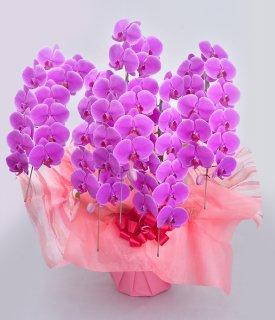 《極キング》バブリーピンク5本立ち 胡蝶蘭