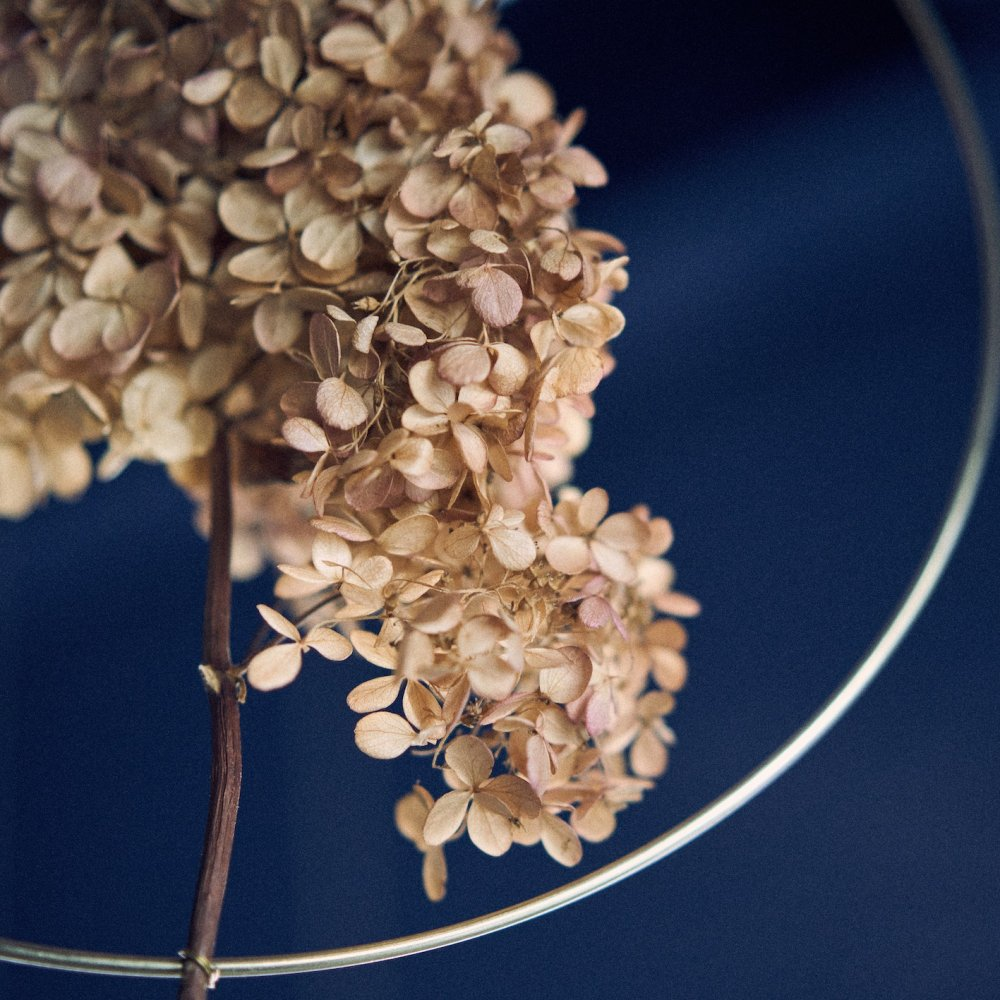 Hydrangea in the Hoop by Kuba for QPF