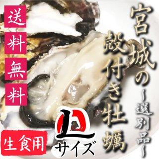 【生食用】【送料無料】宮城県産殻付き牡蠣 選別品Lサイズ20個【クール便!】