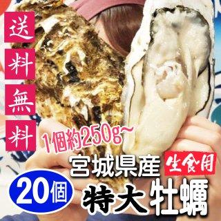 【生食用】【送料無料】期間限定!特大宮城県産殻付き牡蠣 20個【クール便!】