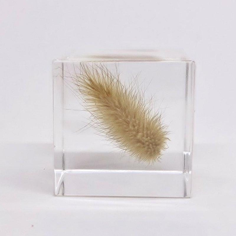 Sola cube ウサギノオ