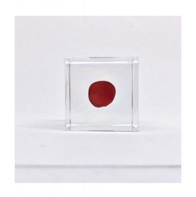Sola cube ワイルーロ