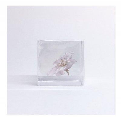Sola cube ソメイヨシノ
