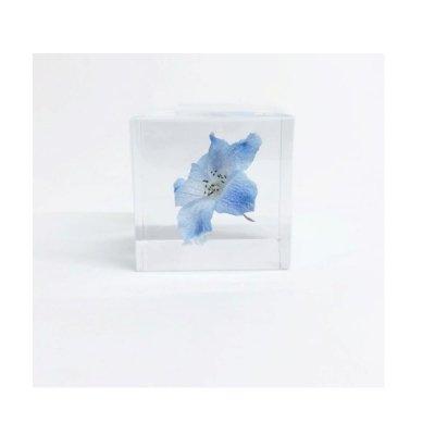 Sola cube デルフィニウム