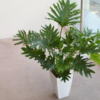 5000円品種おまかせ観葉植物鉢