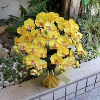 光触媒加工 胡蝶蘭 イエロー(イエロー・グリーン系) Sサイズ5本立ち 陶器鉢植え 花ギフト