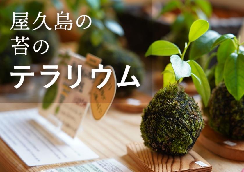 屋久島の苔のテラリウム特集