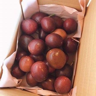 【送料込み】屋久島パッションフルーツ【無選別】1.5kg