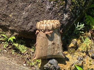 くるみ 花器(豆)一枚皮