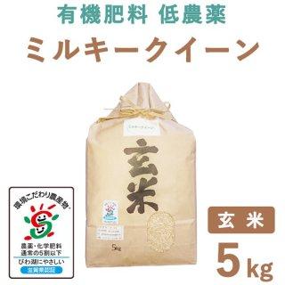 【新米】滋賀県産 ミルキークィーン 玄米 5kg
