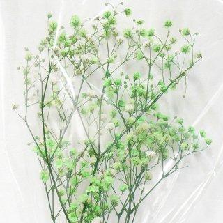 カスミソウ(グリーン) 10g プリザーブドフラワー花材
